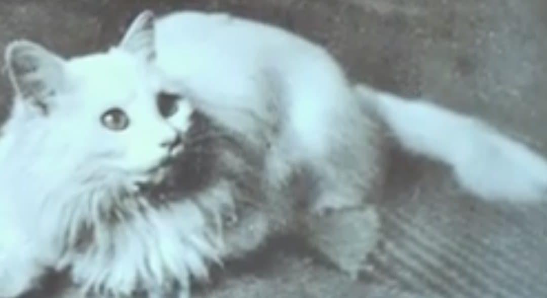 Anina Toskani für Katzenliebhaber
